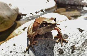 Fauna en los Barrancos Sierra de Guara y Pirineos